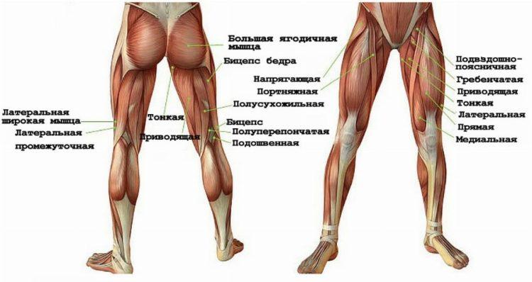 Мышцы при ходьбе, что должны мы знать