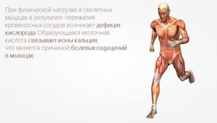 Почему образуется молочная кислота в мышцах?