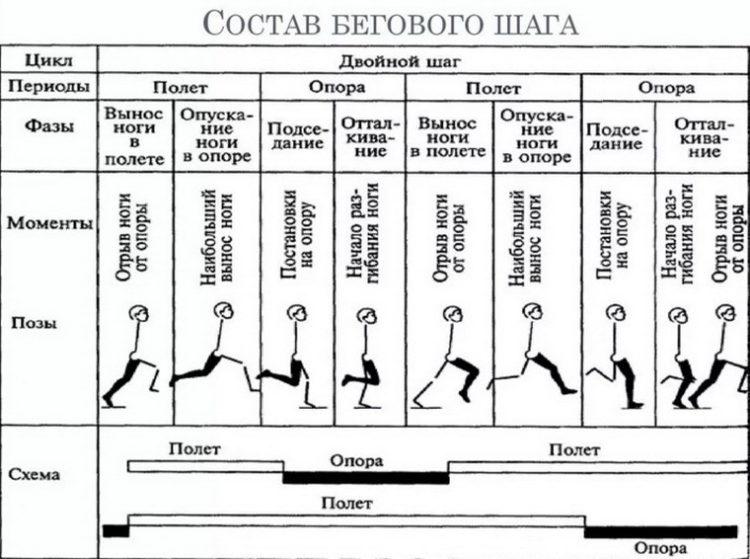 Структура бегового шага